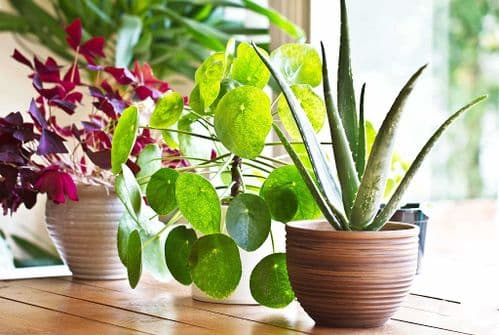 INDOOR PLANTS COMPOST FOR INTERIOR LANDSCAPE PLANTS