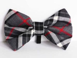 Mabel & Mu 'Family Walks' Pet Dickie Bow From