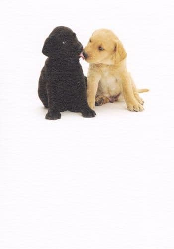 Black and Gold Labrador Greetings Card