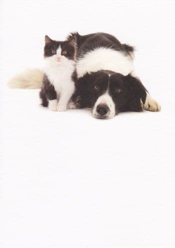 Collie and Kitten Greetings Card