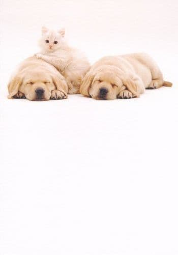 Kitten and Labrador Puppies Greetings Card
