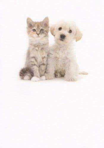Kitten and Puppy Greetings Card