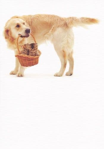 Labrador and Kittens Greetings Card