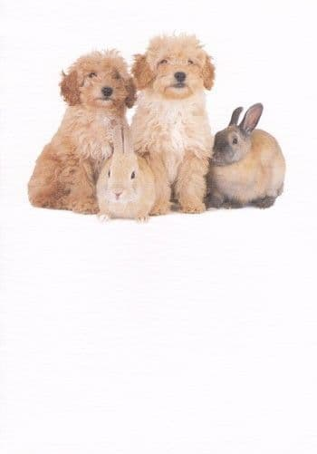 Two Dogs and Two Rabbits Greetings Card