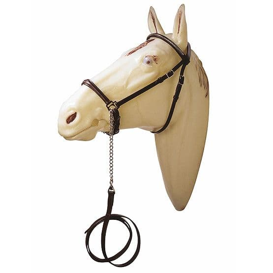 Arab presentation bridle or showing halter with metal decorations
