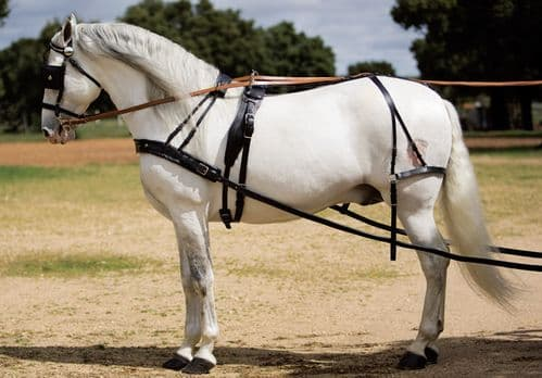 Leather single driving harness with breastplate - Rostock